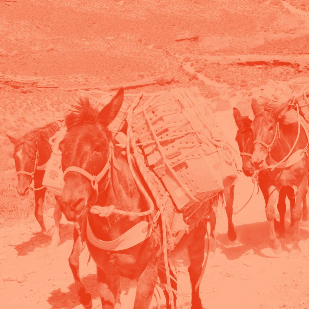 Mule Design